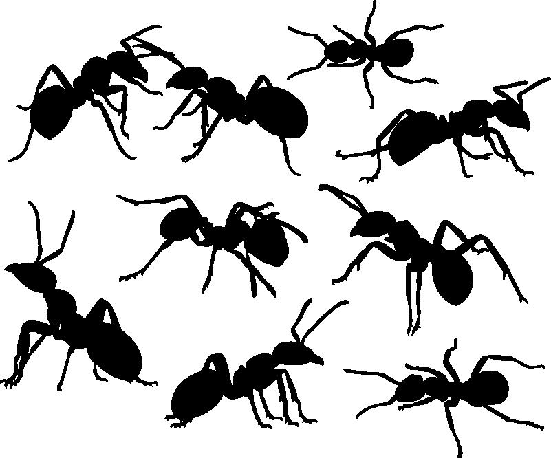 TenVinilo. Vinilo pared Set de hormigas. Original pegatina adhesiva formada por un patrón de nueve hormigas colocadas en diferentes posiciones. +10.000 Opiniones satisfactorias.