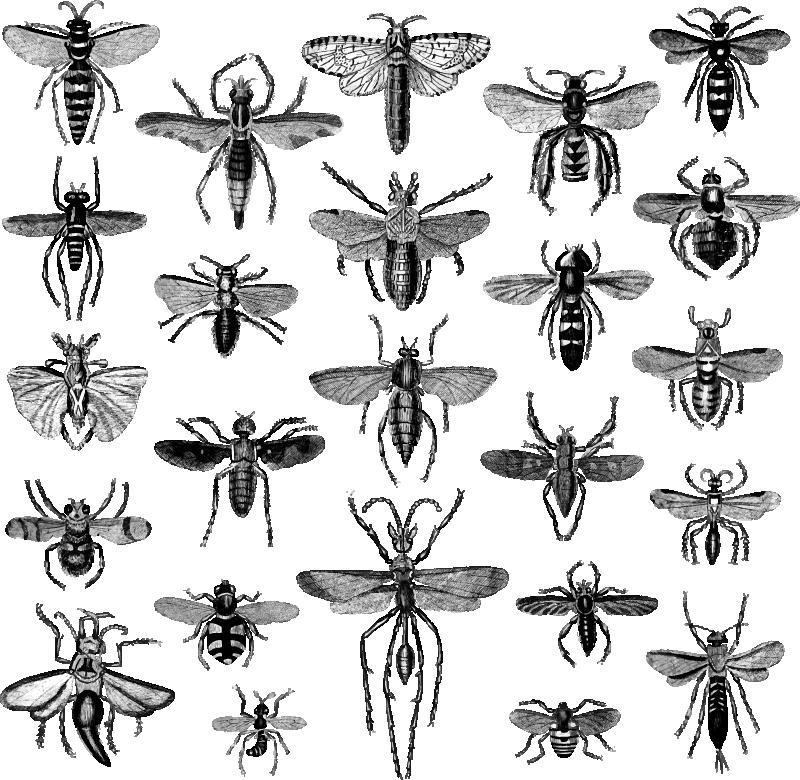 TenStickers. 비행 곤충 벽 데칼. 모든 종류의 곤충을 묘사 한이 환상적인 동물 벽 스티커로 벽을 장식하세요! 매우 쉽게 적용 할 수 있습니다.