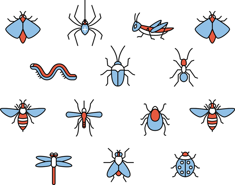 TenStickers. Insects Sheet Animal Wall Stickers. Pay homage to the wonder of insects with this fantastic sheet of animal wall stickers, depicting a group of different insects!