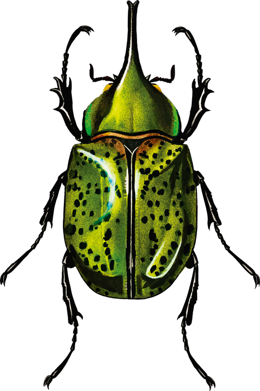 TenStickers. Tropical Beetle Home Wall Sticker. Bring the tropical rainforest into your home with this epic-looking beetle wall sticker. Free worldwide delivery available!