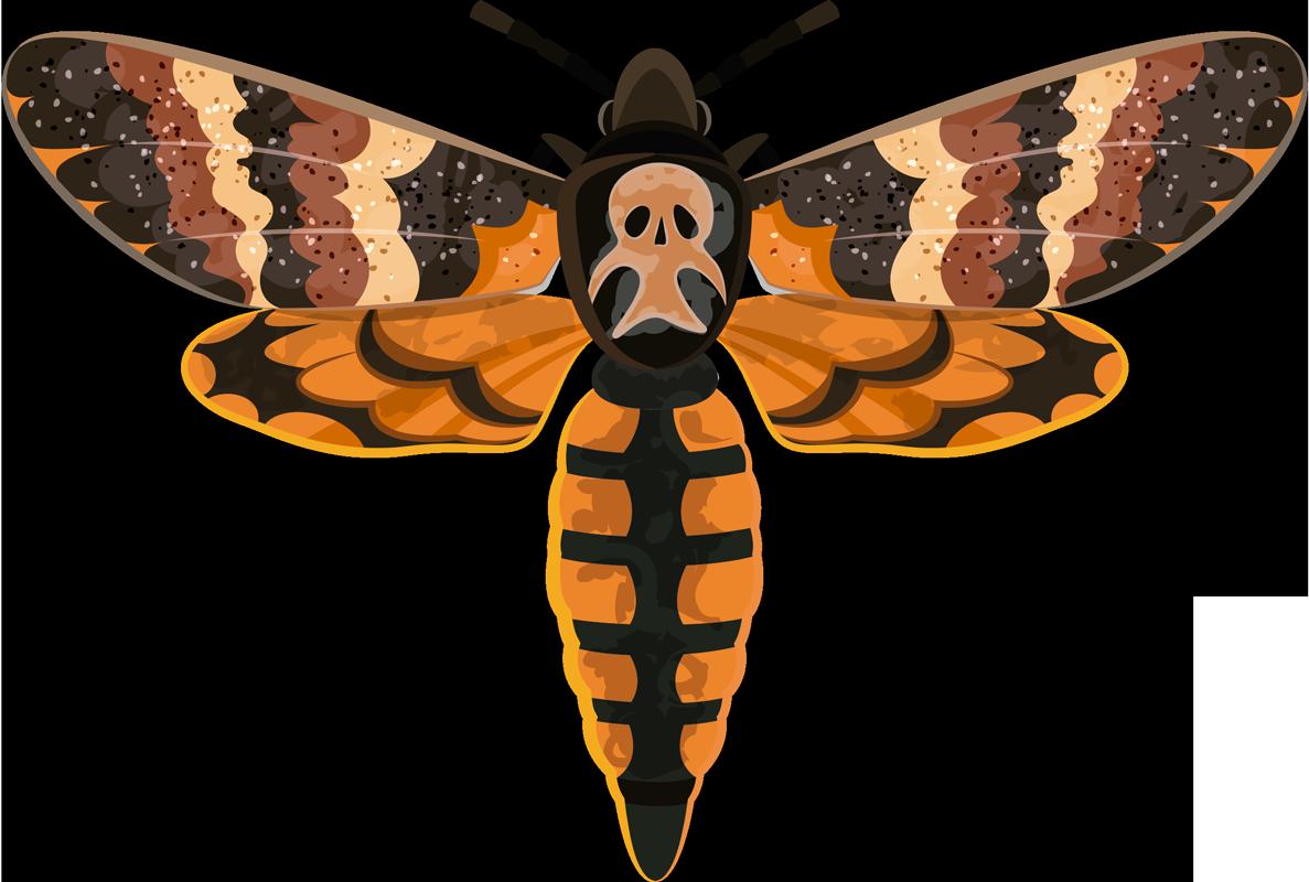 TenStickers. 해골 스핑크스 곤충 벽 스티커. 화려한 아름다운 디자인으로 만든 두개골 spinx 나비 곤충 벽 스티커. 적용하기 쉽고 필요한 크기로 제공됩니다.