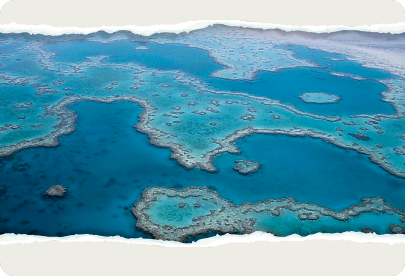 TenStickers. Great Barrier Reef Wall Mural Sticker. Add the Great Barrier Reef to your laptop with this absolutely fantastic laptop sticker depicting that very thing! Choose your size.