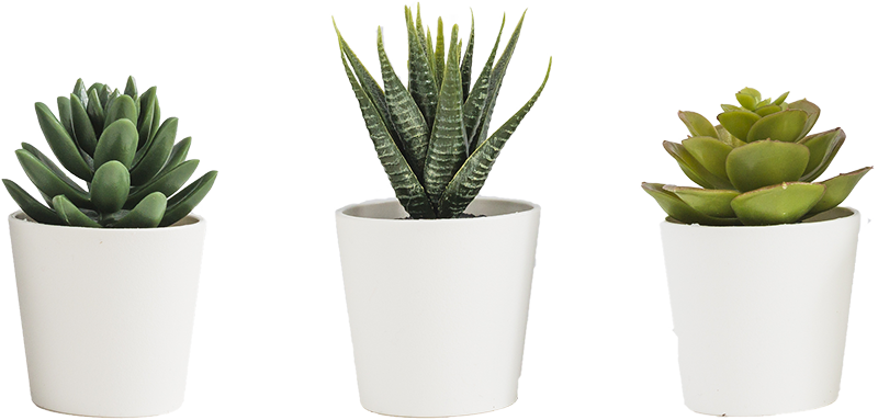 TenStickers. 3D Cacti Pots Living Room Wall Decor. Give any room in your home an extra modern feel with these super cool 3d plant pot wall decals. Choose from a wide range of sizes!