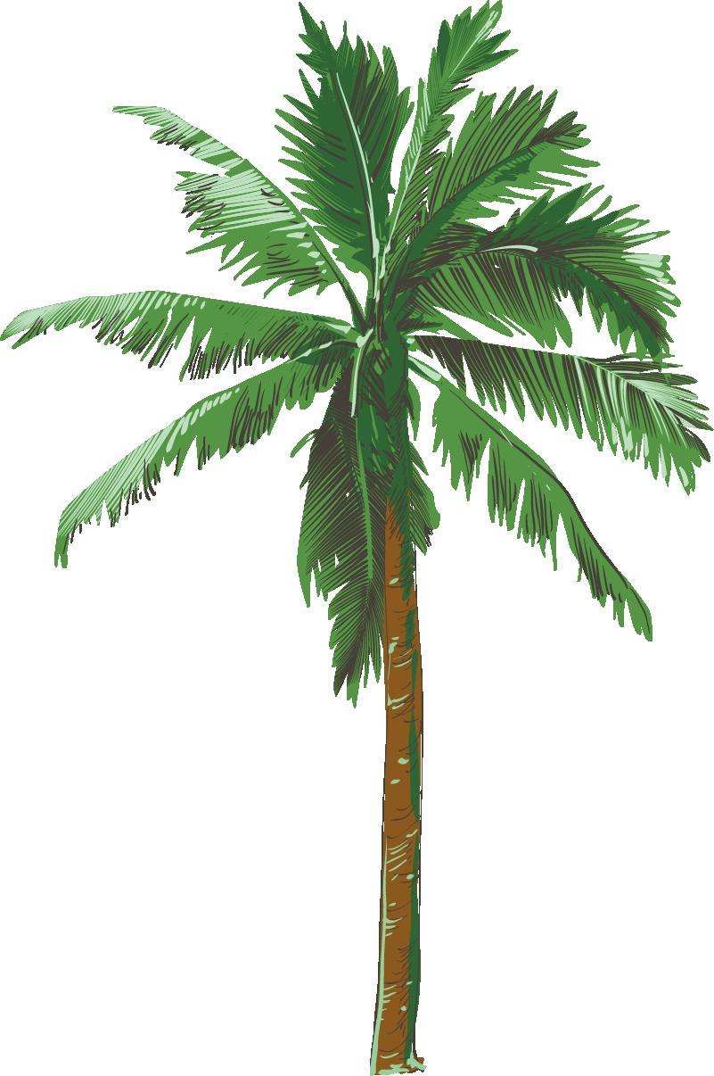 TenVinilo. Vinilo para salón dibujo palmera. Fantástica y colorida pegatina adhesiva formada por la ilustración de un hermosa palmera. Promociones Exclusivas vía e-mail.