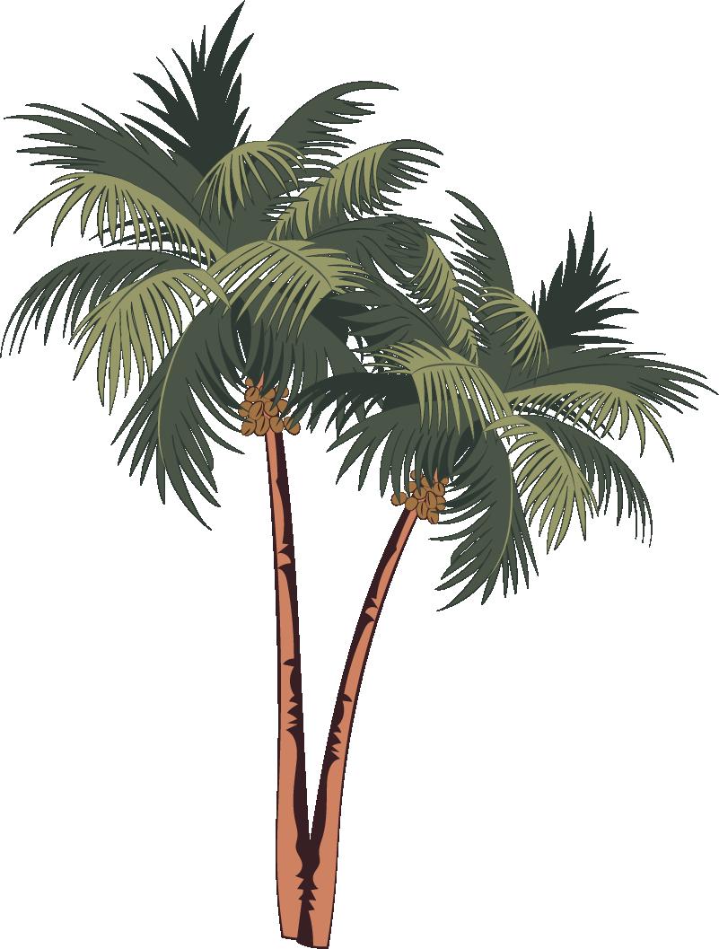 TenStickers. adhesif arbre palmiers dessin. Conception d'autocollant decoratif à la maison d'un palmier tropical. Facile à appliquer et disponible en différentes tailles. Hautement adhésif.