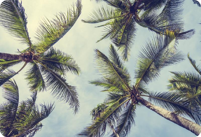 TenStickers. Muursticker boom palmbomen. Leuke tekening palmboom laptopstickers van een mooie palmboom. Een leuke en spontane palmboom laptop stickers geschikt voor alle soorten maten!