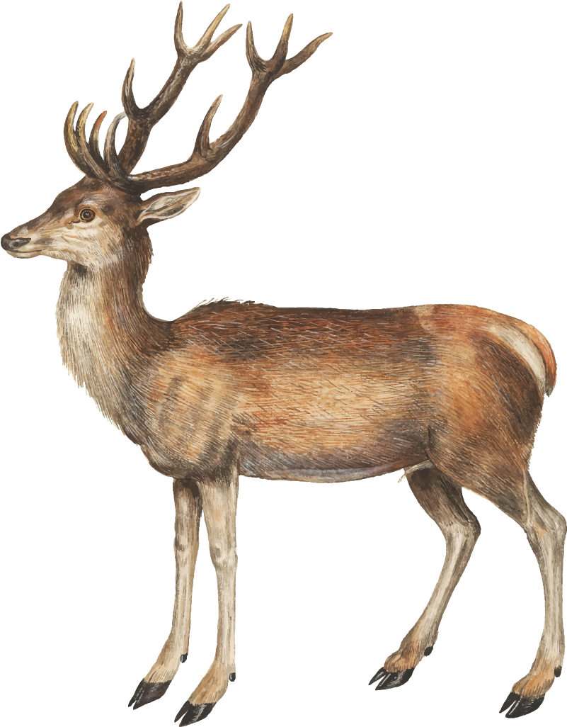 TenStickers. Vintage Deer Stag Living Room Wall Decor. Give any room in your house a woodland feeling with this high fidelity vintage deer wall sticker. Choose from a range of sizes!