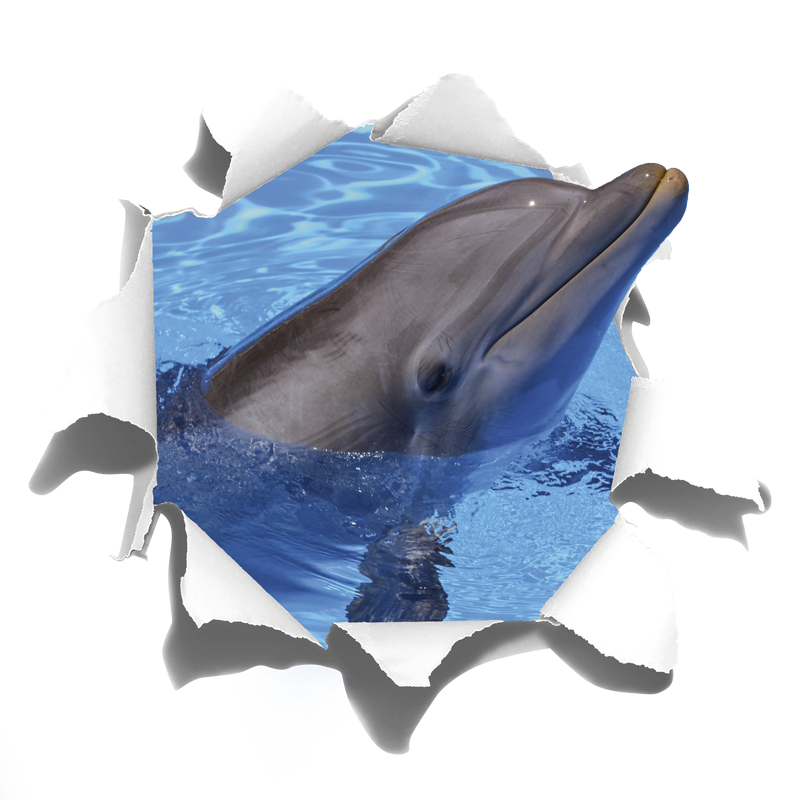 TenStickers. Dolphin visual effects wall sticker. This wall art sticker represents a joyfull dolphin, going out from the wall. An animal decal that will bring a refreshing touch to your decoration !