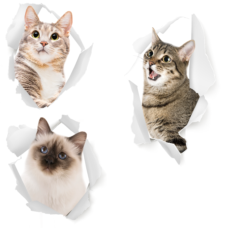 TenStickers. Kittens animal wall sticker. This animal sticker represents cats in a realistic style, going out from the wall : to show everyone how much you love cats !
