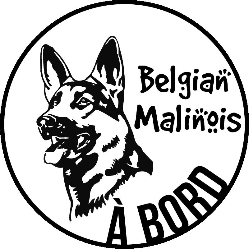 """TenStickers. Sticker Animal Malinois Belges à bord. Ce sticker tuning """"malinois belge à bord"""" montrera à vos voisins de la route que vous ne voyagez jamais sans votre fidèle compagnon à quattre pattes."""