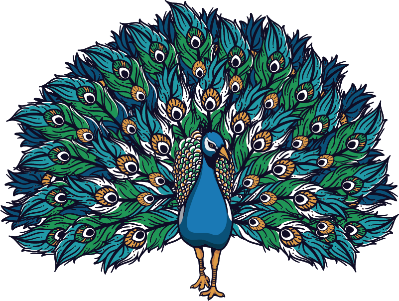 TenStickers. Proud peacock bird sticker. Beautiful proud peacock wall art sticker to decorate the living room space. Choose the size that is preferable for a desired space.
