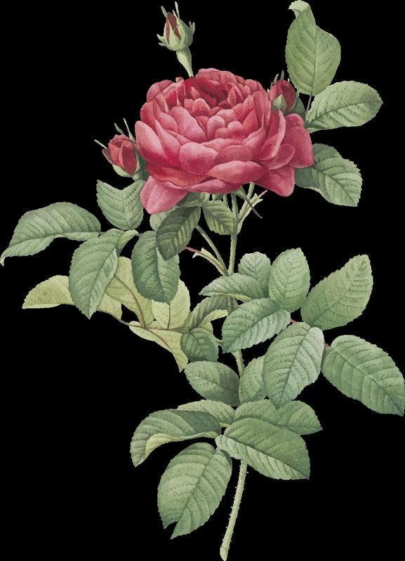 TENSTICKERS. 赤いバラの家の壁のステッカー. 居間のための赤いバラの壁のステッカーは内部を飾ることおよびそれに独特な特性を加えるための完全な考えである。花のステッカーを確認してください。