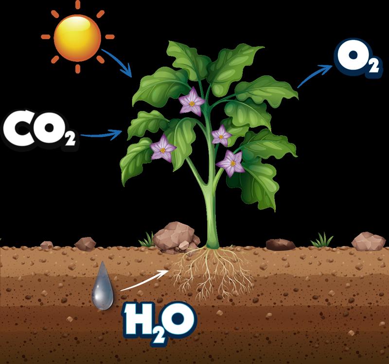 TenStickers. Naklejka na ścianę dla dzieci fotosynteza natura. Naklejka winylowa rośliny przedstawia glebę, roślinę z kwiatami oraz słońce padające na kwiat, dekoracyjna i edukacyjna naklejka!