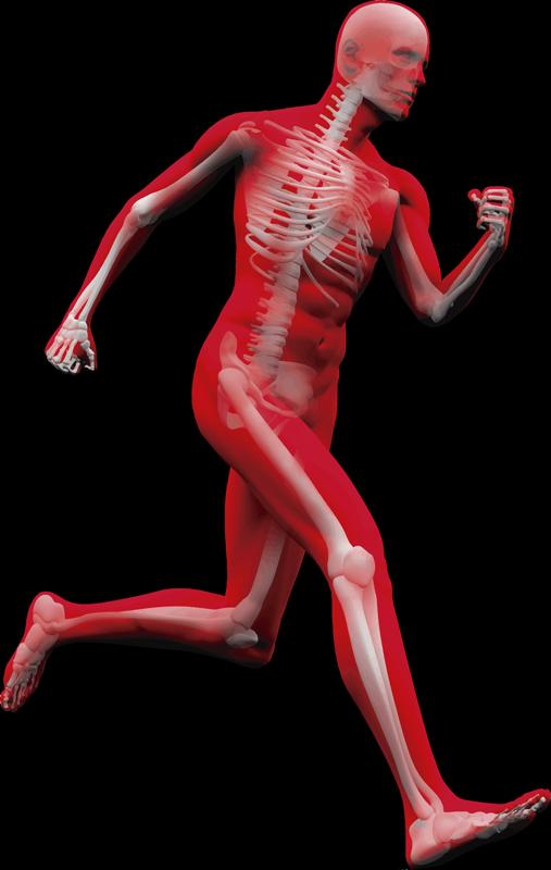 TenVinilo. Vinilo pared esqueleto corriendo. Original pegatina silueteada de ciencia formada por la ilustración de un esqueleto corriendo. Descuentos para nuevos usuarios.