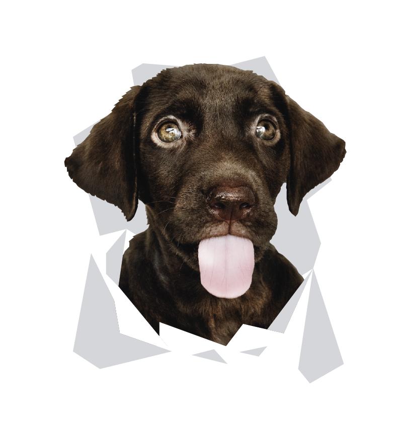 TenStickers. Laptopticker dieren honden hoofd. Een fantastische laptop honden sticker om uw PC mee te decoreren. Dit ontwerp zal uw saaie laptop volledig omtoveren tot een dierlijke laptop.