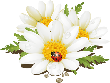 TenStickers. Daisies Shower Sticker. An illustration of three daisies accompanied by a little ladybird. A superb decal from our creative collection of daisy wall stickers.