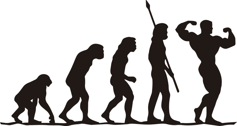 TenStickers. Gym evolutie muur decor. Gym evolution zelfklevende muursticker kunst van hoe je evolueert vanaf het begin van een gym sessie. Dit inspiratieontwerp is van matte kwaliteit en kan in elke maat zijn.