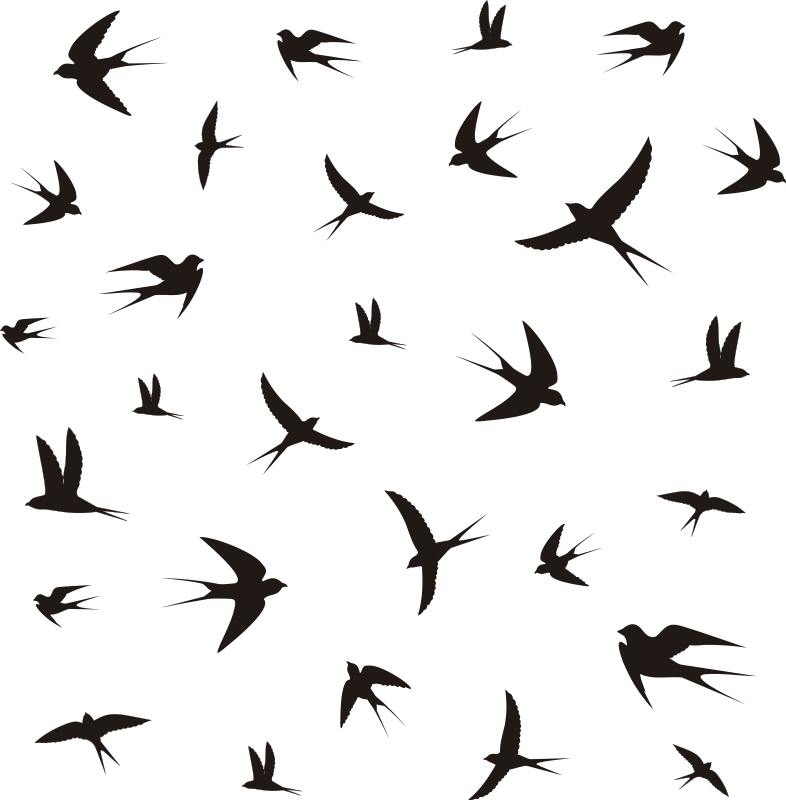 TenStickers. Swallows window decal. Easy to apply window decal created with birds and you can have this design in any other colour and size that you prefer.