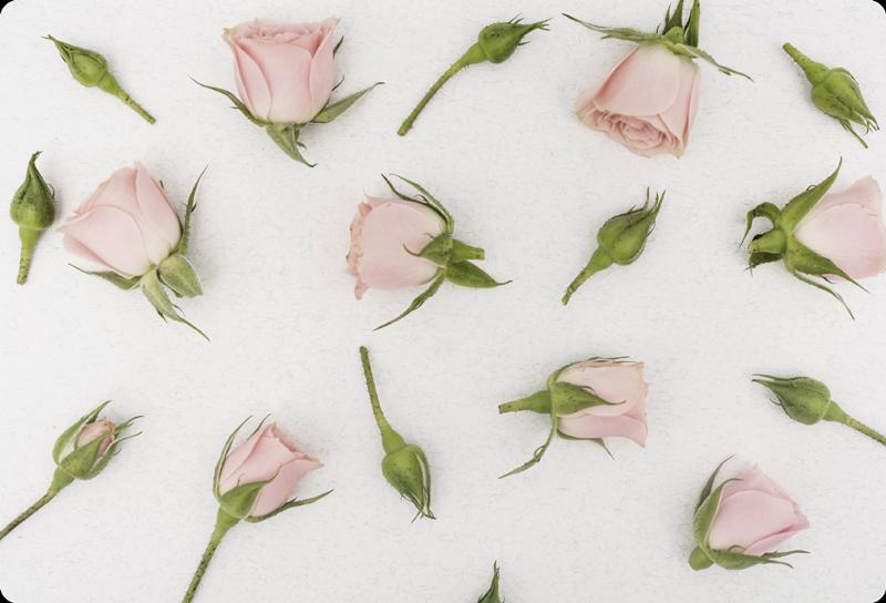 TenStickers. Naklejka na laptopa romantyczny kwiat. Łatwa w użyciu naklejka na laptopa i tablet przedstawiająca wiosenne i romantyczne kwiaty w różowawym odcieniu. Projekt jest rewelacyjny na wiosnę.