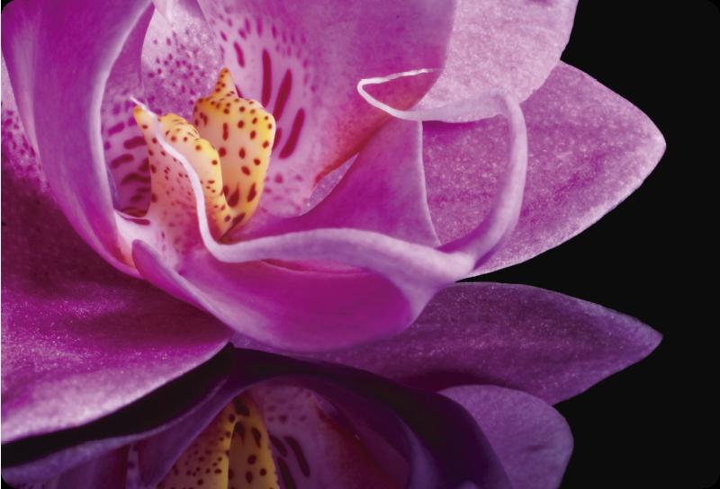 TenVinilo. Vinilo para portátil de orquídeas. Diseño decorativo de vinilo de portátil de una colorida planta de orquídea para cubrir toda la superficie de un ordenador portátil. Fácil de aplicar.