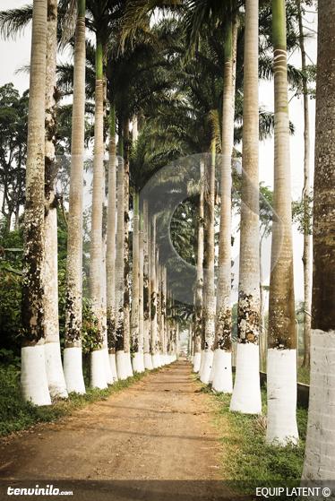 TenStickers. Pictură murală pentru perete. Picturi foto - fotografie estudi latentă. O potecă prin două linii de palmieri. O caracteristică distinctivă pentru decorarea casei sau afacerii tale.