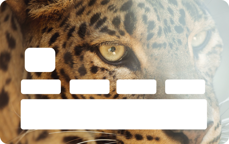 TenStickers. Leopard Kreditkartenaufkleber. Kaufen sie unser Aufkleberatives vinyl-aufkleber-design für bankkarten, das mit dem riesigen gesichtsausdruck eines leoparden erstellt wurde. Einfach zu applizierendes vinyl mit hoher qualität.