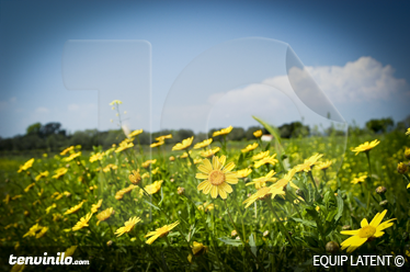 TenStickers. Gelbe Blumenwiese Aufkleber. Wandtattoo Gras - Mit diesem wunderschönen Foto Aufkleber von einer Blumenwiese können Sie Ihre weiße Wand dekorieren und zum Hingucker machen.