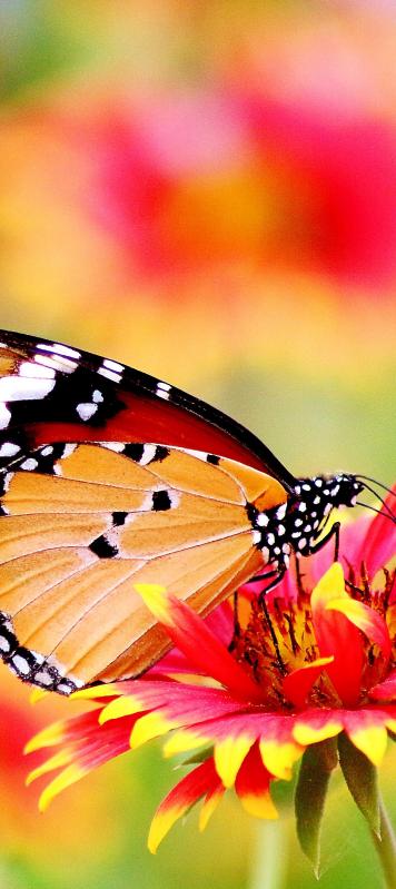TENSTICKERS. 花のガラスのドアデカールに腰掛け蝶. 蝶は花のドアのステッカーのデザインの上に腰掛けて、家のドアスペースを変えます。任意の表面に収まるようにカスタマイズできます。