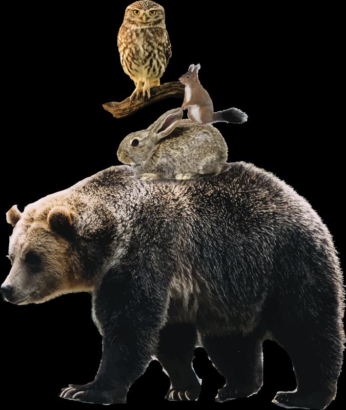 Tenstickers. Realistiset eläimet karhun villieläimillä. Koristeellinen eläinseinätarra, jossa on realistinen karhu ja muut eläimet. Valitse se tilalle sopivimmassa kokovaihtoehdossa.