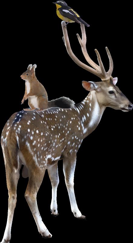 TENSTICKERS. 鹿の野生動物のステッカーが付いた現実的な動物. 鹿や他の動物の実際の視覚的外観のデザインを備えた装飾的な動物の壁のステッカー。欲望の大きさでお選びください。