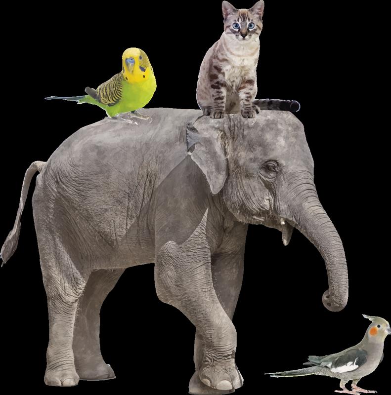 TENSTICKERS. さまざまな動物の野生動物ステッカー. 巨大なゾウや他の動物のいる子供たちのための動物の壁のステッカー。スペースに最適なサイズで購入してください。