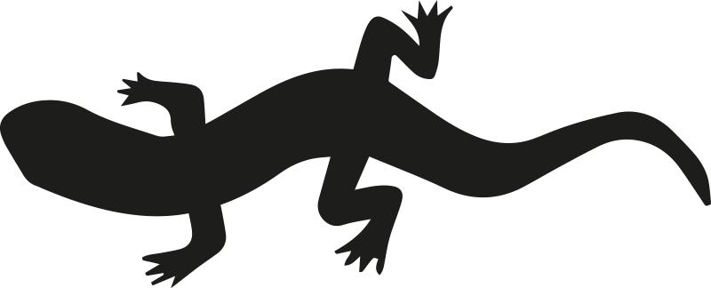 Tenstickers. Olm kannettavan tietokoneen iho. Koristeellinen kannettava tietokone tarra, jolla on suunniteltu olm sammakkoeläin olennosta erityisten eläinten ystäville. Saatavana erivärisinä ja -kokoisina.