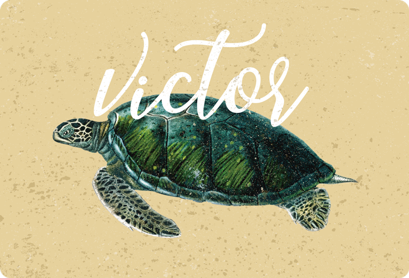 TenStickers. Sea turtle with name laptop skin. Decorate a laptop with this lovely turtle animal impression that is customisable in any name of choice. We have the design in any size of choice.