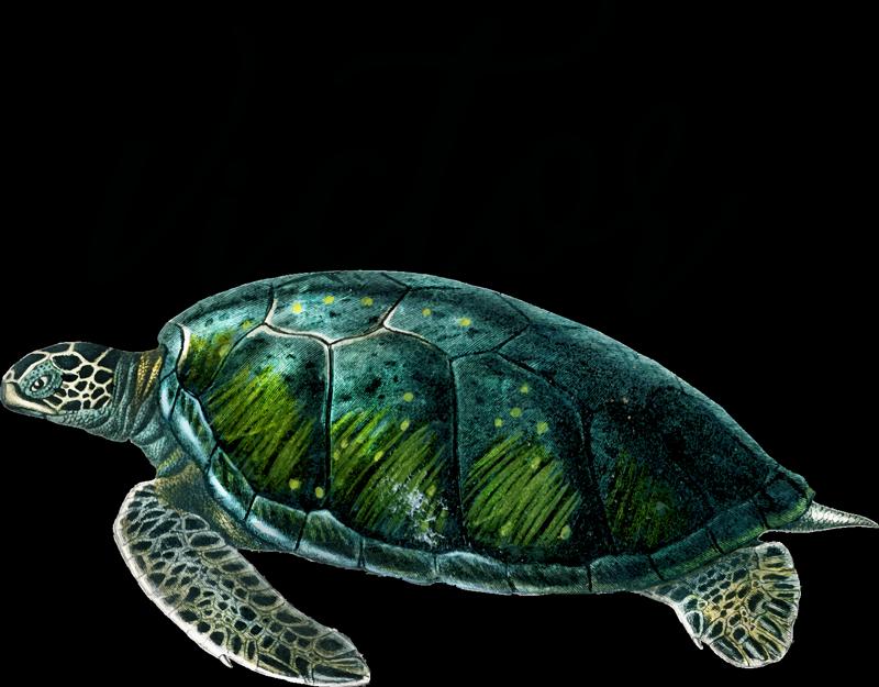 TenStickers. Stencil animale tartaruga marina con nome. Adesivo da parete animale tartaruga marina per decorare la casa con qualsiasi personalizzazione del nome. Facile applicare e disponibile nelle dimensioni richieste.