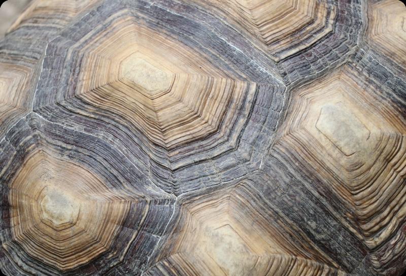 TenVinilo. Skin para laptops caparazón de tortuga. Vinilo para portátiles con textura de concha de tortuga. El diseño está disponible en cualquier tamaño requerido ¡Envío a domicilio!