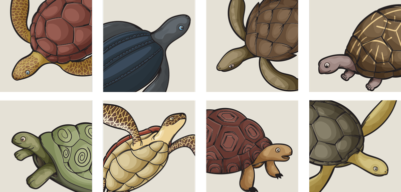 TenStickers. variety of turtles tile transfer. Decorative turtle animal tiles sticker with prints of colorful turtles to decorate a kitchen or bathroom space with tiles surface.
