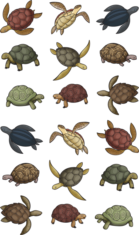 TenStickers. variety of turtles animal sticker. Decorate the home with our original animal wall sticker designed with colorful images of varieties of turtles. It is available in any required size.