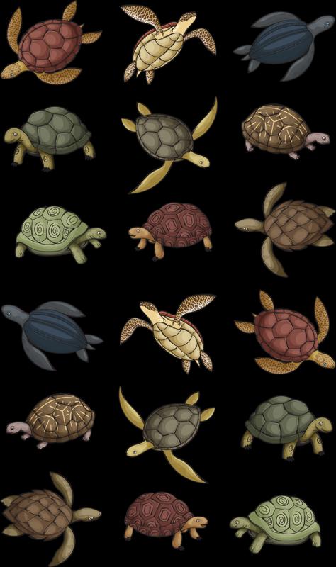 TenStickers. Varietate de țestoase autocolant de animale. Decorați casa cu autocolantul nostru original de perete conceput cu imagini colorate din soiuri de țestoase. Este disponibil în orice dimensiune necesară.