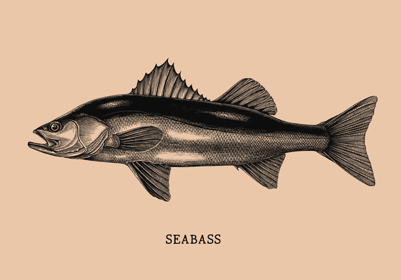 TENSTICKERS. 現実的なシーバスの手描きの魚の壁のデカール. スズキのデザインがリアルな外観の特別な装飾的な魚の壁のステッカー。高品質で適用が簡単です。