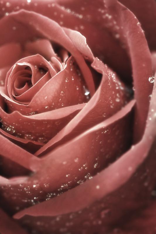 TENSTICKERS. バラ冷蔵庫ラップ. オリジナルの装飾用のバラの花の冷蔵庫のステッカーで、冷蔵庫スペースをグラムで飾ります。必要な寸法に合わせてカスタマイズできます。