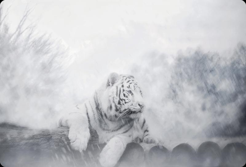 TENSTICKERS. 虎は雪のラップトップの皮膚のデカールに嘘をついた. 雪の環境でフィーチャーされる私たちの虎の動物のラップトップであなたのラップトップをどこでも際立たせましょう。どのサイズでもご利用いただけます。
