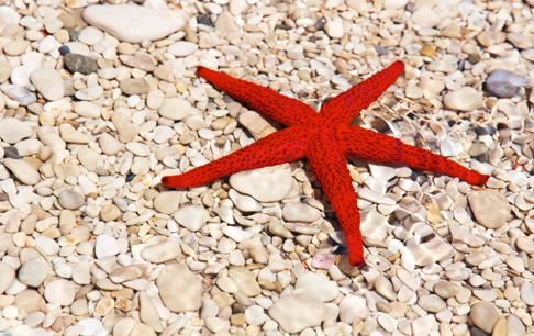 TenStickers. Sticker muurfoto rode zeester. Een leuke muursticker met de foto van een rode zeester op een strand van stenen. Leuke wanddecoratie voor het opfleuren van je woning!