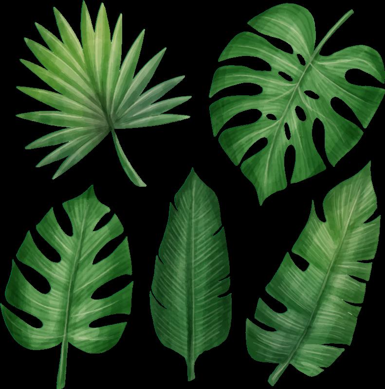 TenVinilo. Pack 5 vinilos plantas colección monsteras realistas. ¿Buscas vinilo pared salón de plantas naturales realistas y originales para decorar tu casa? Aquí tienes lo que buscas ¡Envío a domicilio!