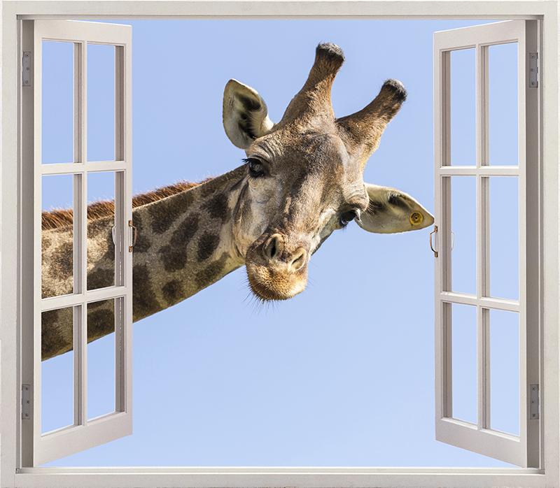 TenStickers. Muurstickers visuele effecten Giraf komt door een raam 3d. Decoratief giraffe 3d sticker die u geweldig zou vinden op uw ruimte. Het ontwerp bevat een grote giraf die het hoofd door een raamruimte trekt.