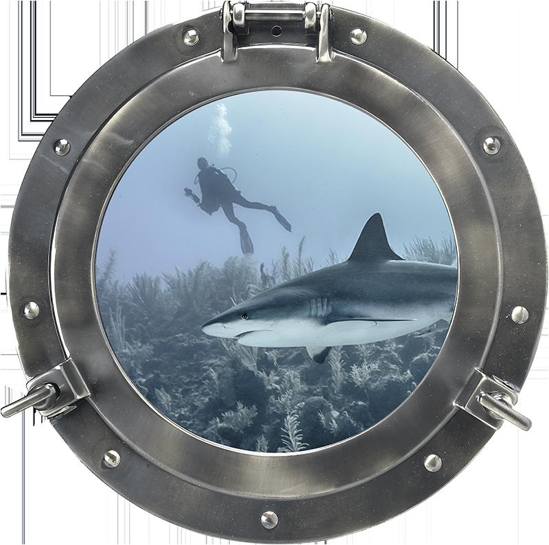 TENSTICKERS. 魚の窓からサメを3d視覚効果ステッカー. 家庭用およびその他のスペース用の海洋生物の装飾的な3d視覚効果ウォールステッカーデザイン。それは、海のダイバーと一緒に海の下にサメを含むデザインです。