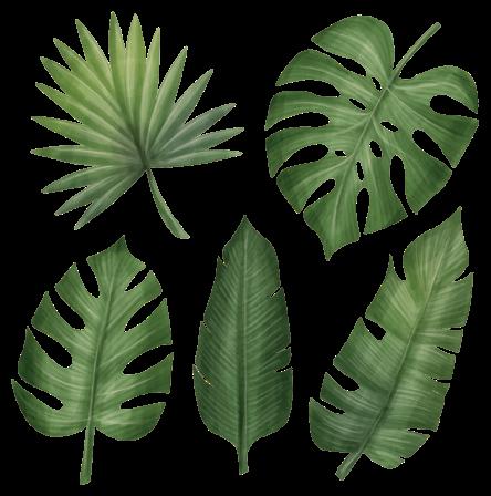 TenStickers. Muurstickers planten Grote groene bladeren. Groene bladplant sticker met verschillende ontwerpen van bladeren. Als u van natuur en planten houdt, dan is dit ontwerp iets voor jou.