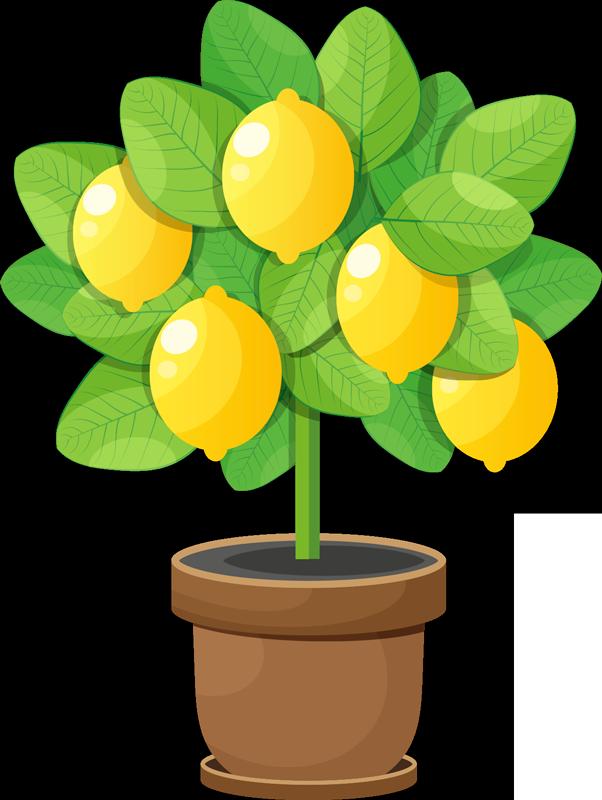 TENSTICKERS. かわいいレモンの木のフルーツウォールステッカー. 美しい実例となるレモンの木のステッカー。デカールは多くの異なる色の素敵なレモンを備えています。適用が簡単で長持ちします。