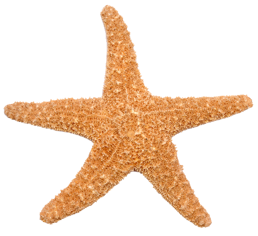 TenStickers. Starfish Wall Sticker. A simple but an original starfish design from our collection of sea wall stickers. If you are a person that loves the sea life then this is for you!