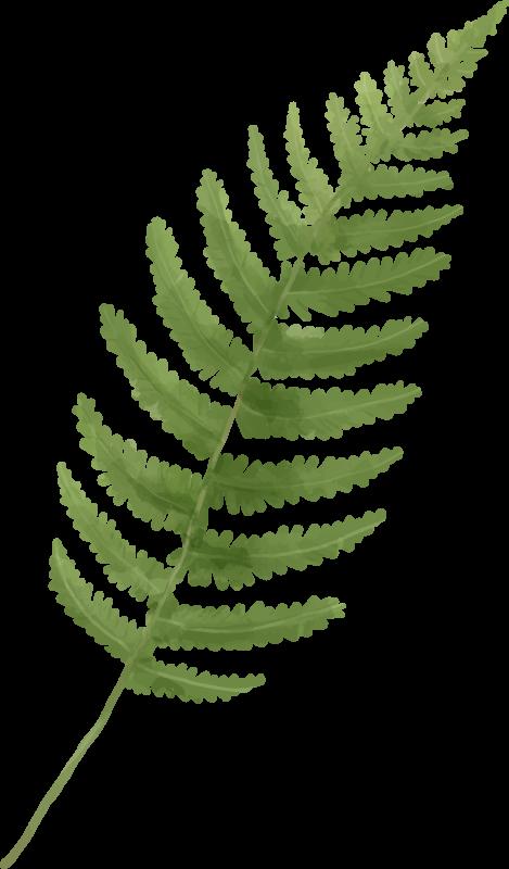 TENSTICKERS. シダの葉の植物のデカール. あなたの家の装飾、オフィスおよび他の場所のためのシンプルだが素敵なシダの葉の植物の壁のステッカー。それは耐久性があり、適用が簡単で、サイズがあります。