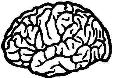 TenStickers. Sticker hersenen. Een leuke muursticker met een afbeelding van het brein van de mens. Een leuke decoratie sticker voor de muren of ramen in uw woning of zaak.